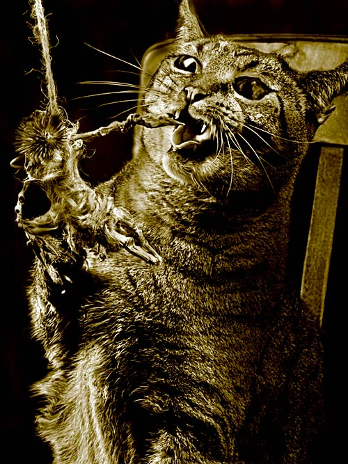 The Deadly Mr. Whiskers
